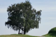 Einsame Rast oberhalb Langwied
